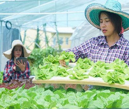 Pathum Thani ASEAN Wide Food Hub_og